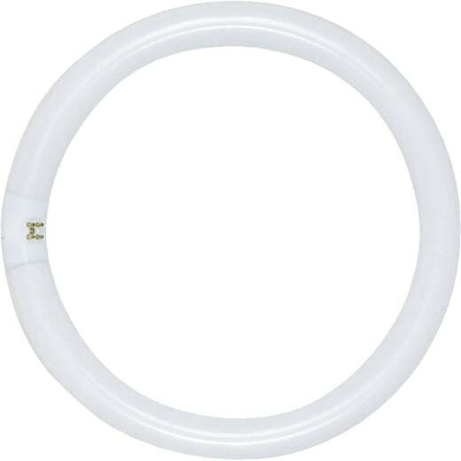 Satco 32W 12 In. Cool White T9 Circline 4-Pin Fluorescent Tube Light Bulb